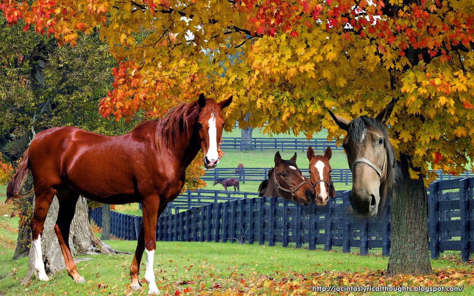 My thoughts in rhyme horses for Horse farm