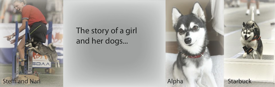 The story of a girl and her dogs...