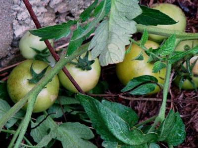 compostagem, horta e educação ambientla