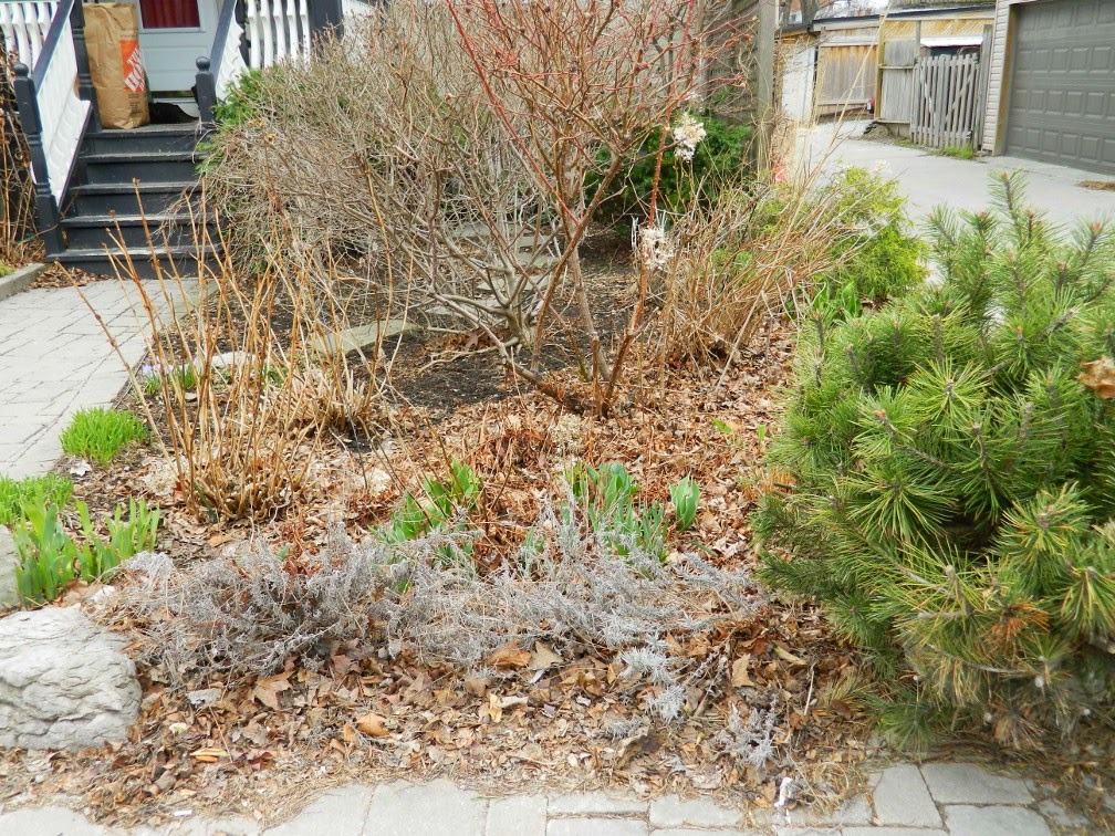 Spring garden clean up Leslieville before Paul Jung Gardening Services Toronto