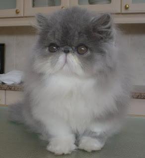 Kucing Sebagai Hewan Peliharaan Terbaik