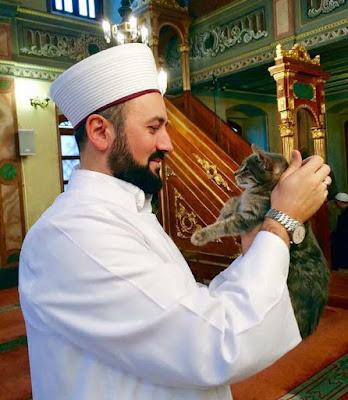 foto kucing di dalam masjid 05