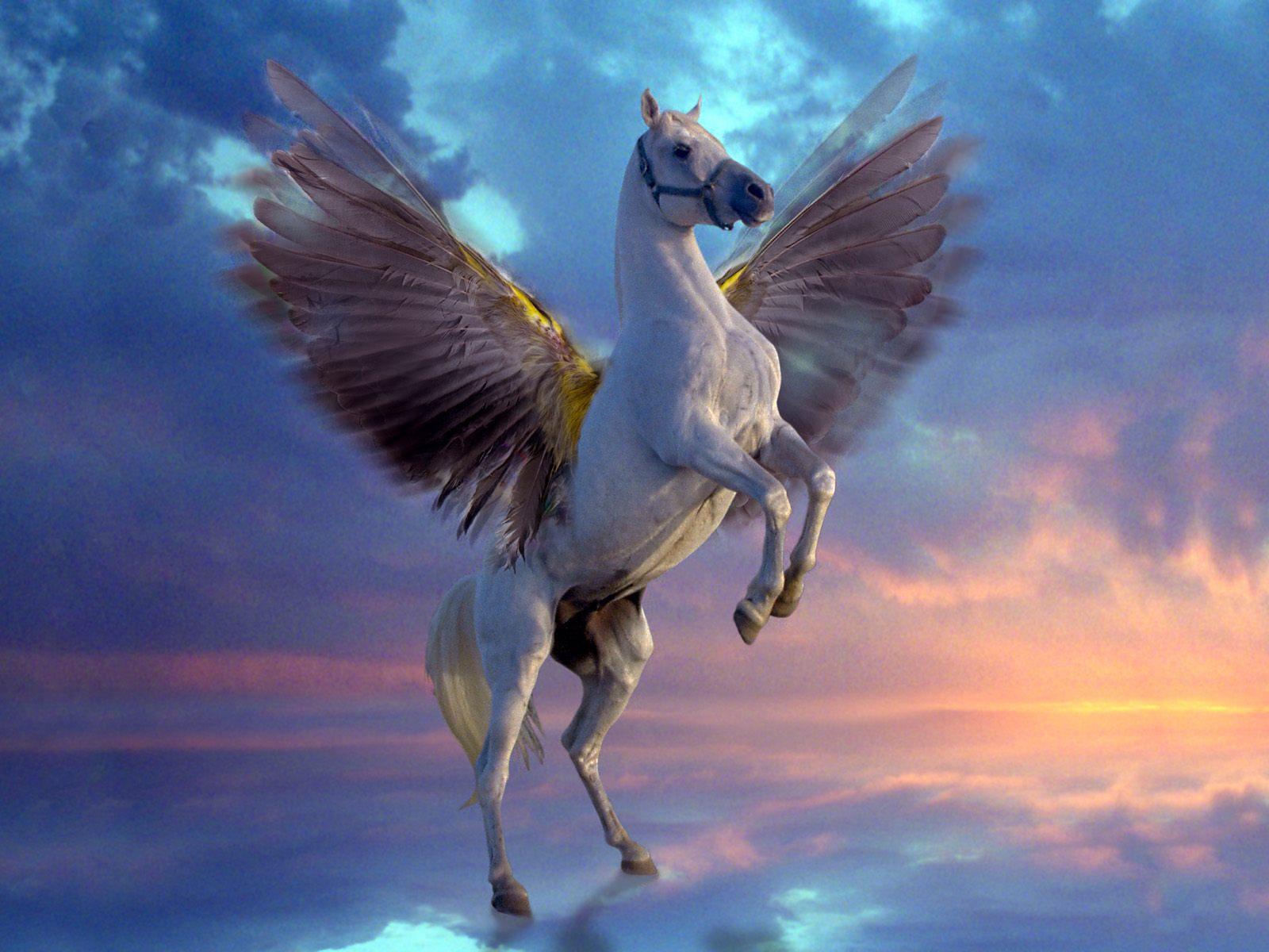 Cool   Wallpaper Horse Angel - 501136  Gallery_734377.jpg