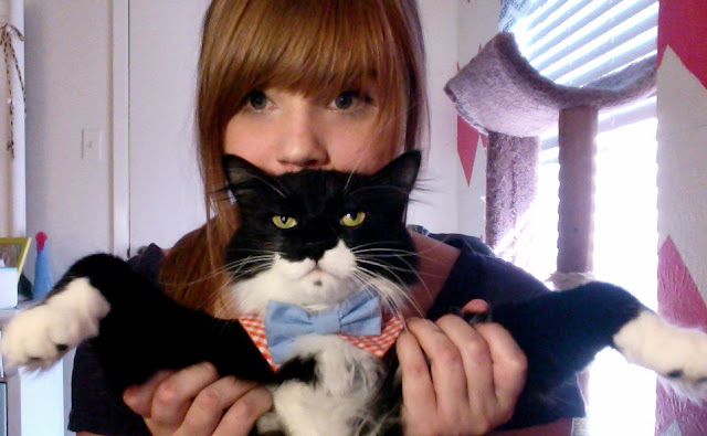 funny cats, cute cat pictures, cat wears bow tie