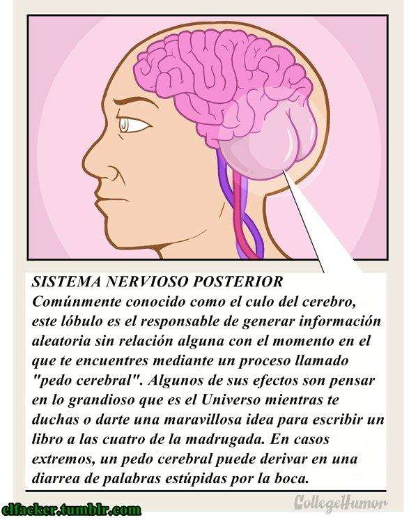 BIOLOGIA ESTUPIDA | XAVI CON X DE MIXTA