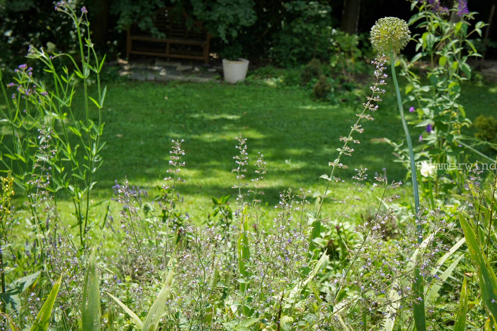 Garten Minze