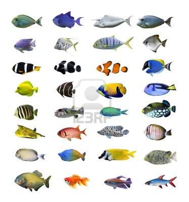 Beeldende vorming juni 2013 for Names for pet fish
