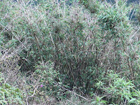 Flora & Fauna - Riverstone-Pitawalapatana,Knucklea mountain range Matale