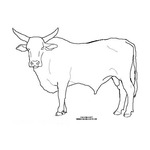 pbr bull coloring pages - photo#13