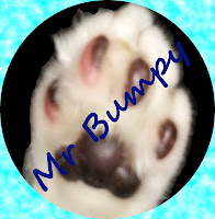 Image: Mr Bumpy's paw, with his name written across it.