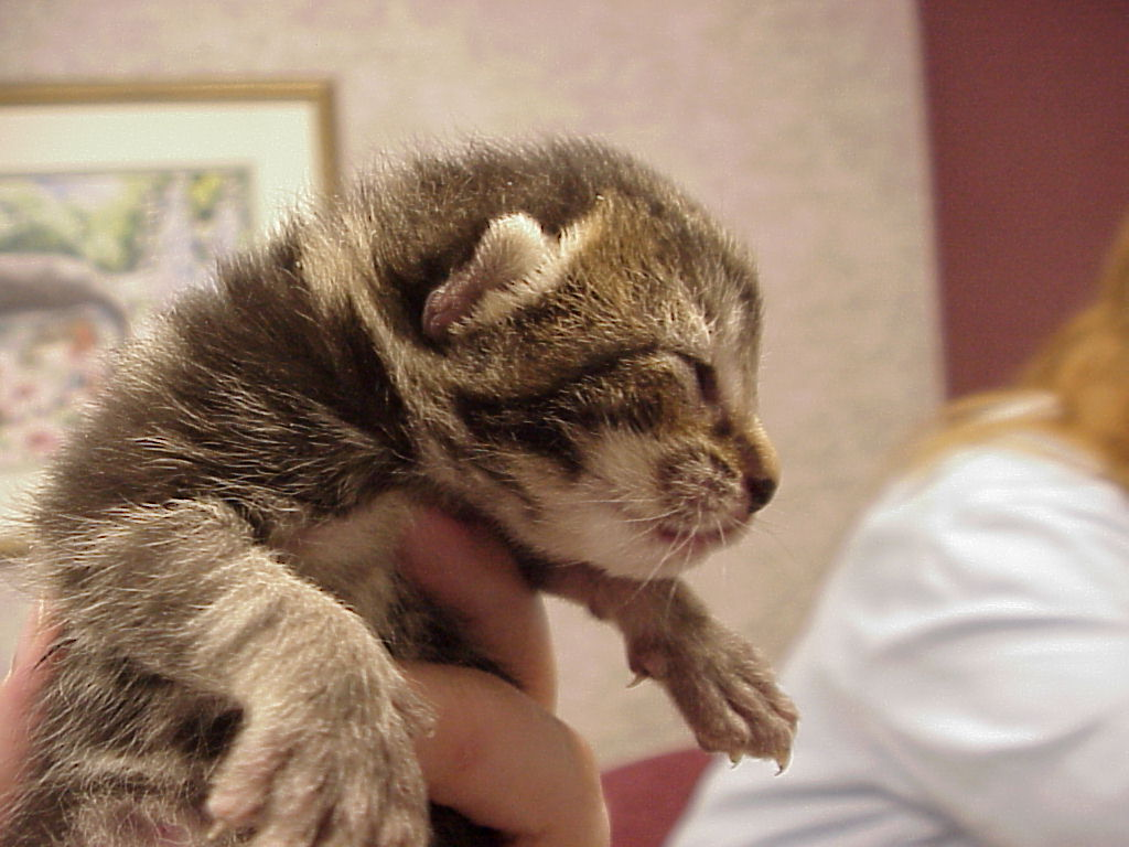 Exclusively Cats Veterinary Hospital Blog Kitten Care How old is