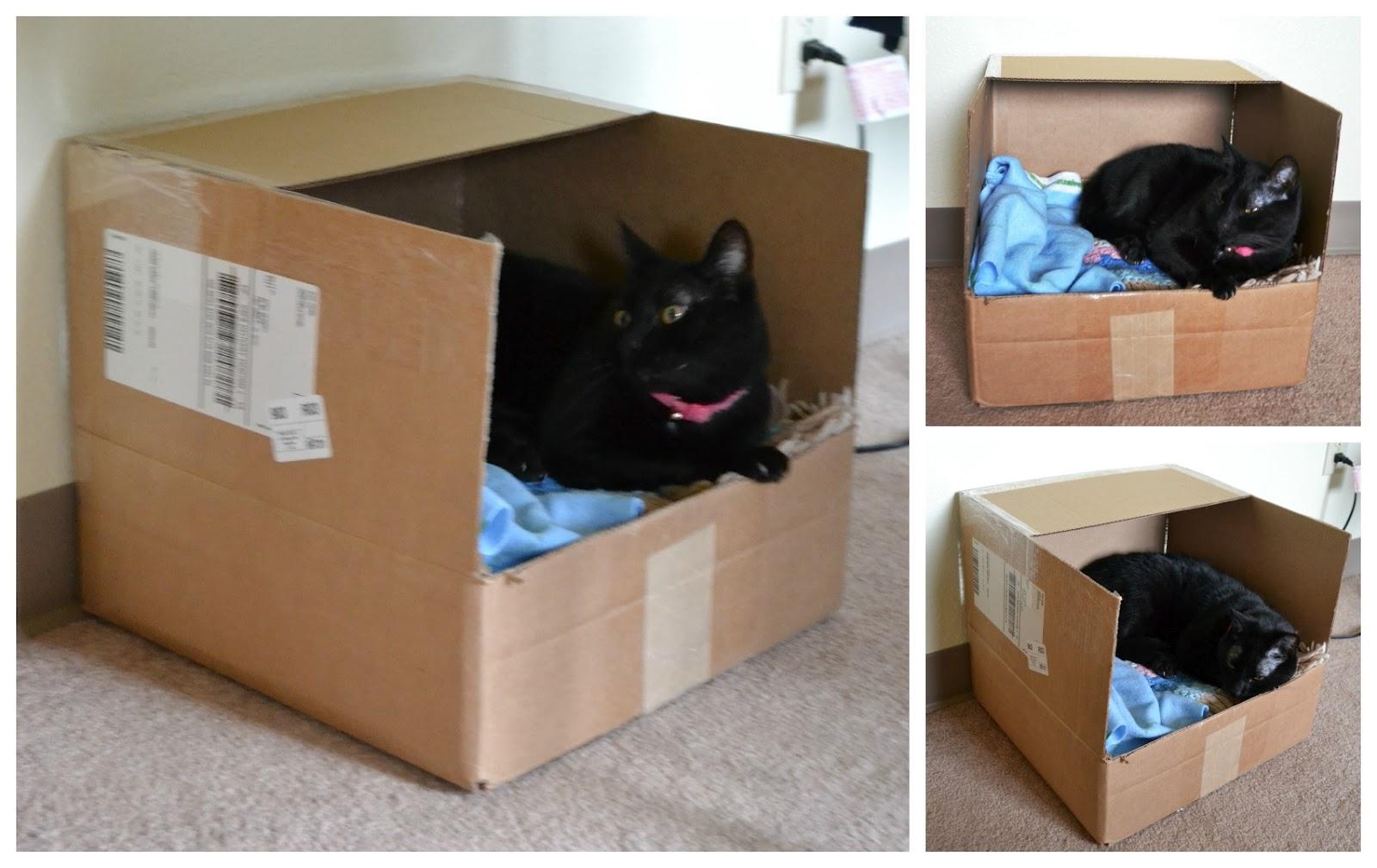 Как сделать домик из коробки для щенка