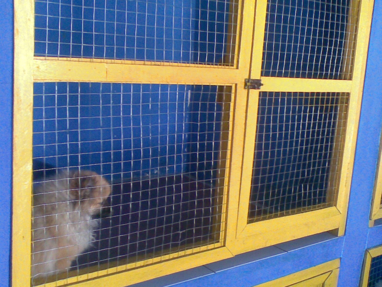 Gambar 2 Kandang Permanen Untuk Anjing Ukuran Kecil Toy