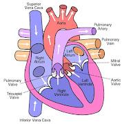 Artery damage is the problem in heart disease.