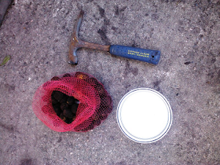 rock hammer, bowl, and bag of cured black walnuts