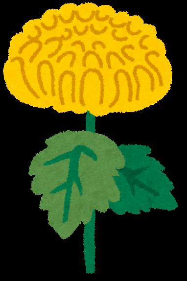 菊の画像 p1_6