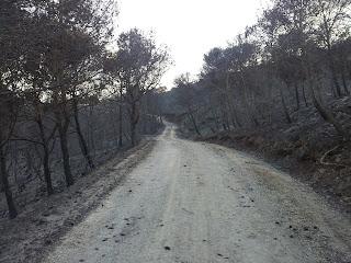 Fotos del incendio en la Costa del Sol