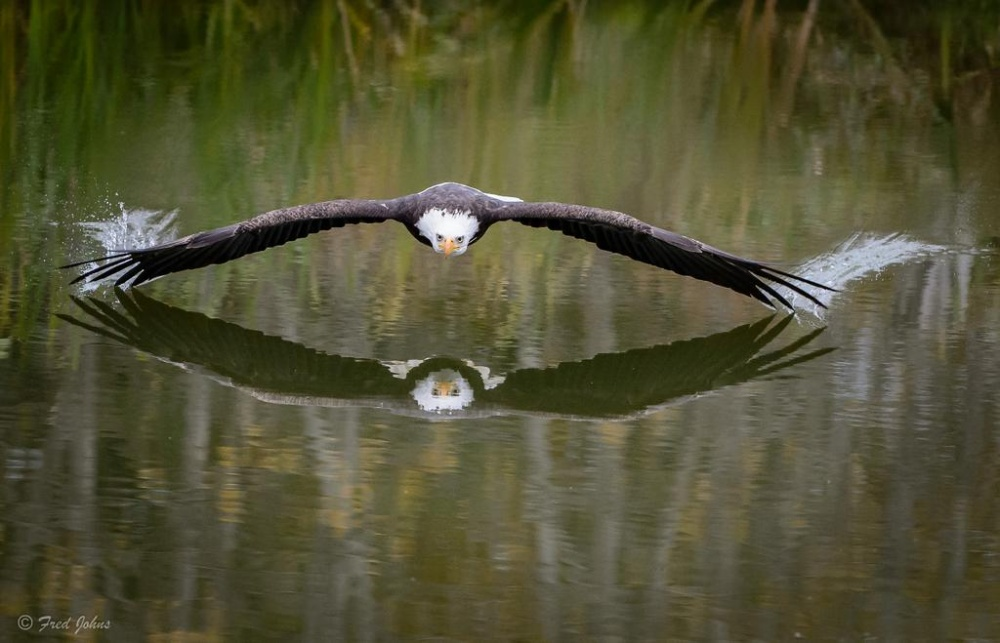 The 100 best photographs ever taken without photoshop - An eagle soaring over a lake in Canada