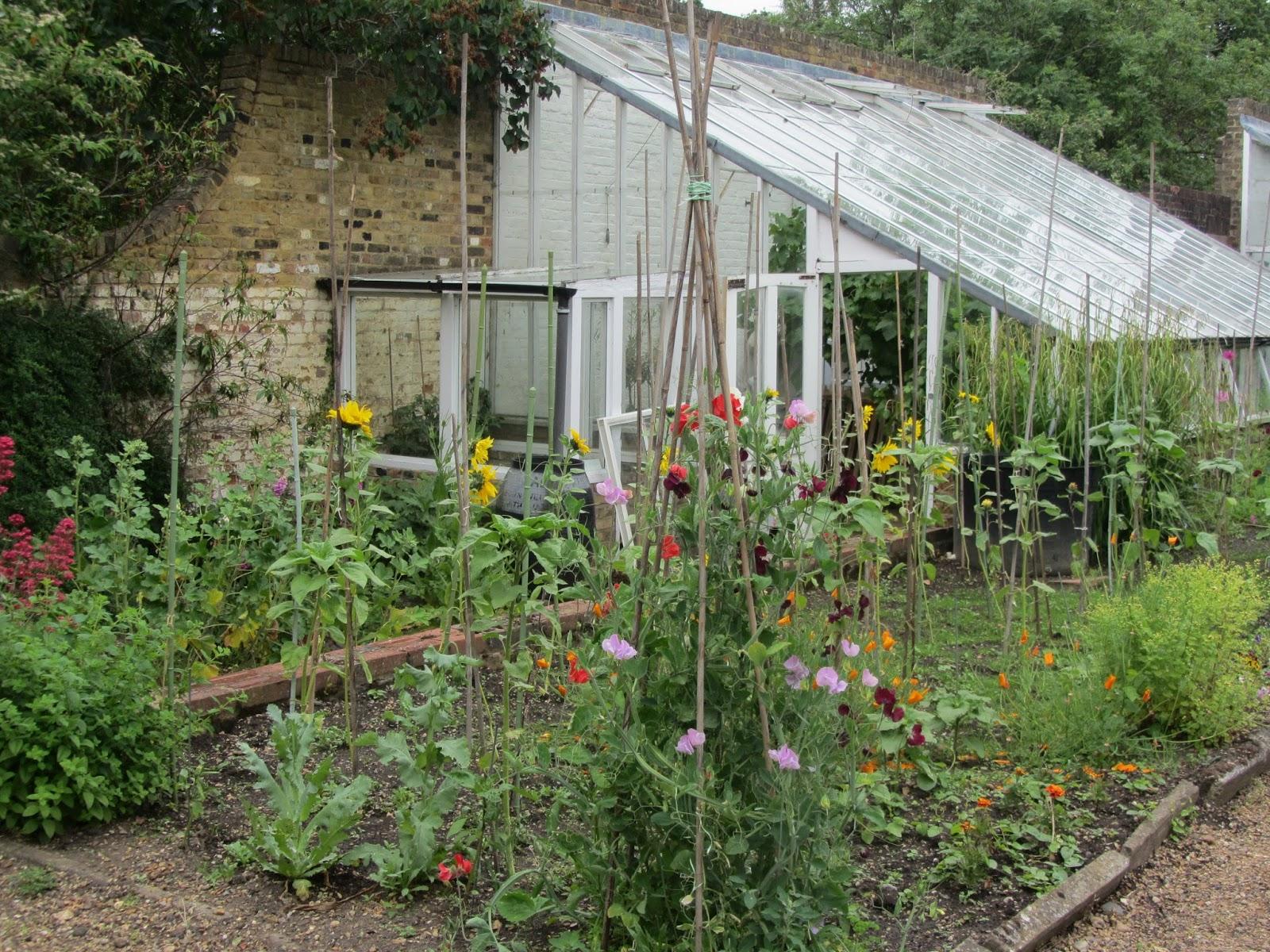 Ham photos rear garden at ormeley lodge - Img_1333 Jpg