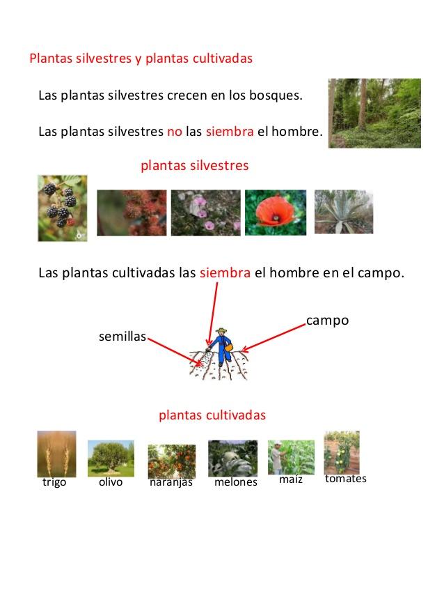La aventura de aprender As plantas silvestres e as plantas cultivadas