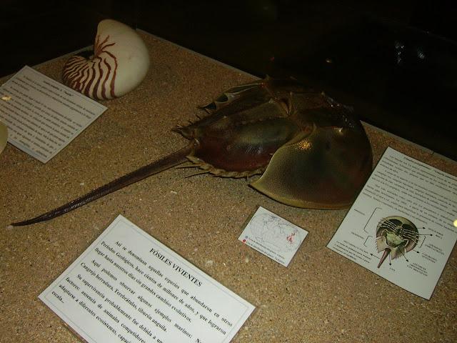 museo marítimo de luanco