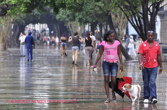 Una pareja pasea su perro bajo una fina lluvia en el Paseo del Prado en La Habana, Cuba, el 15 de febrero de 2013.