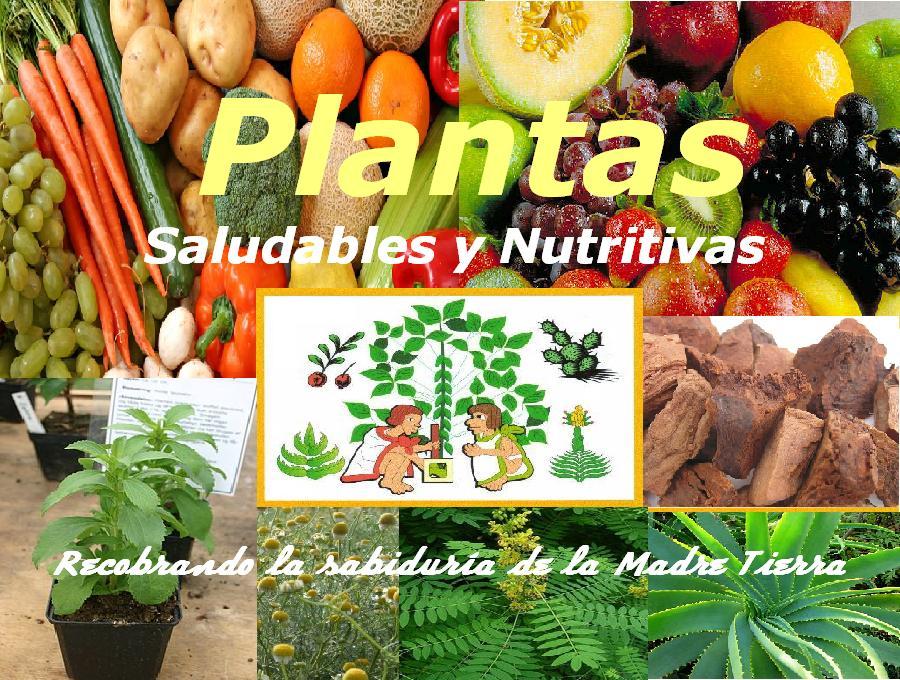 Plantas Saludables y Nutritivas