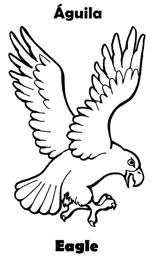 Animales acuáticos y aereos para dibujar - Imagui