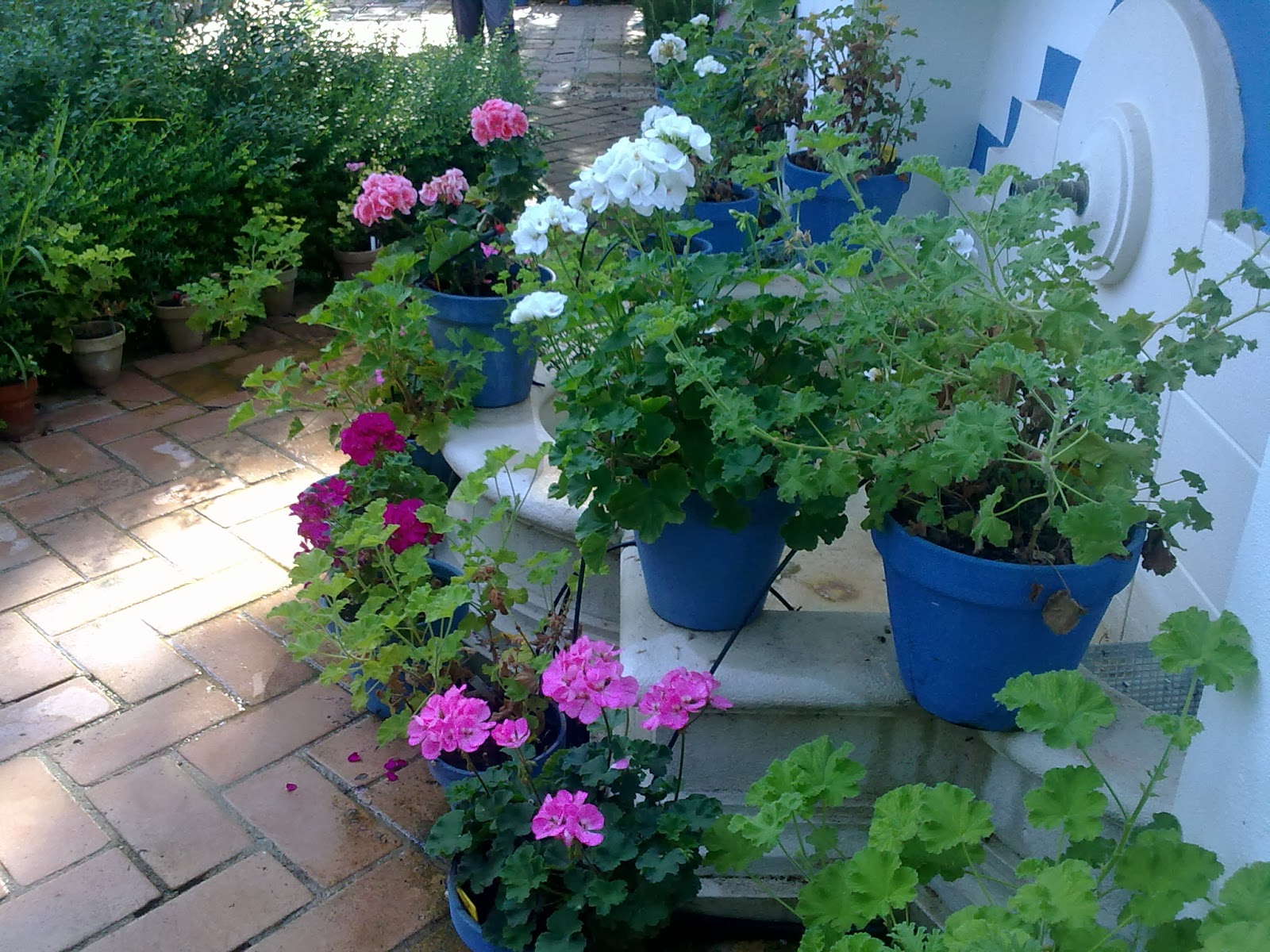Entre patios y plantas que plantas poner en el interior for Como decorar mi patio con plantas