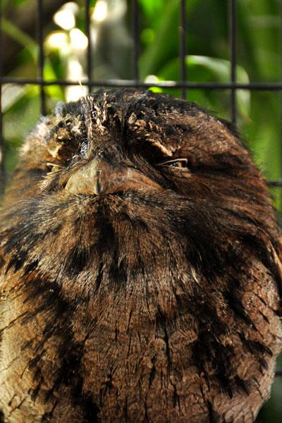 owl reptile park