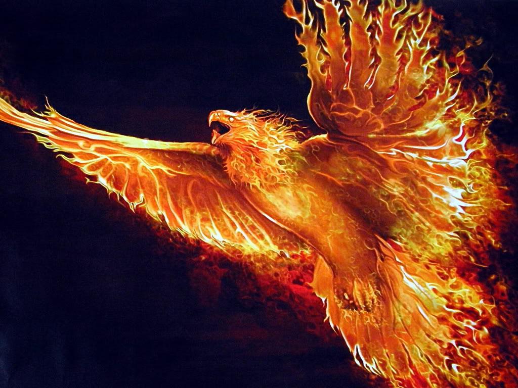 The myth of phoenix imagem - Fenix bird hd images ...