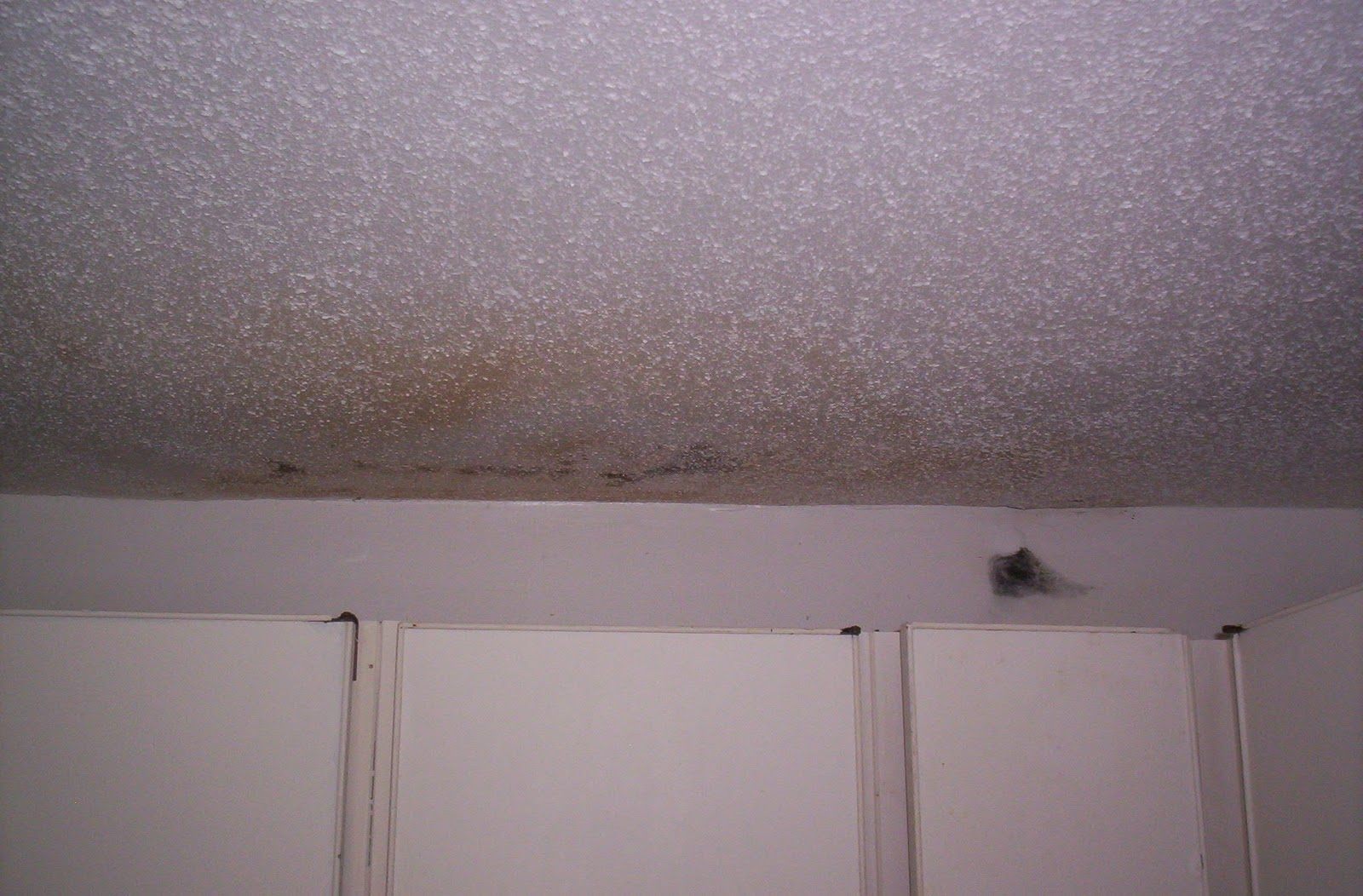 how to know if you have black mold in house