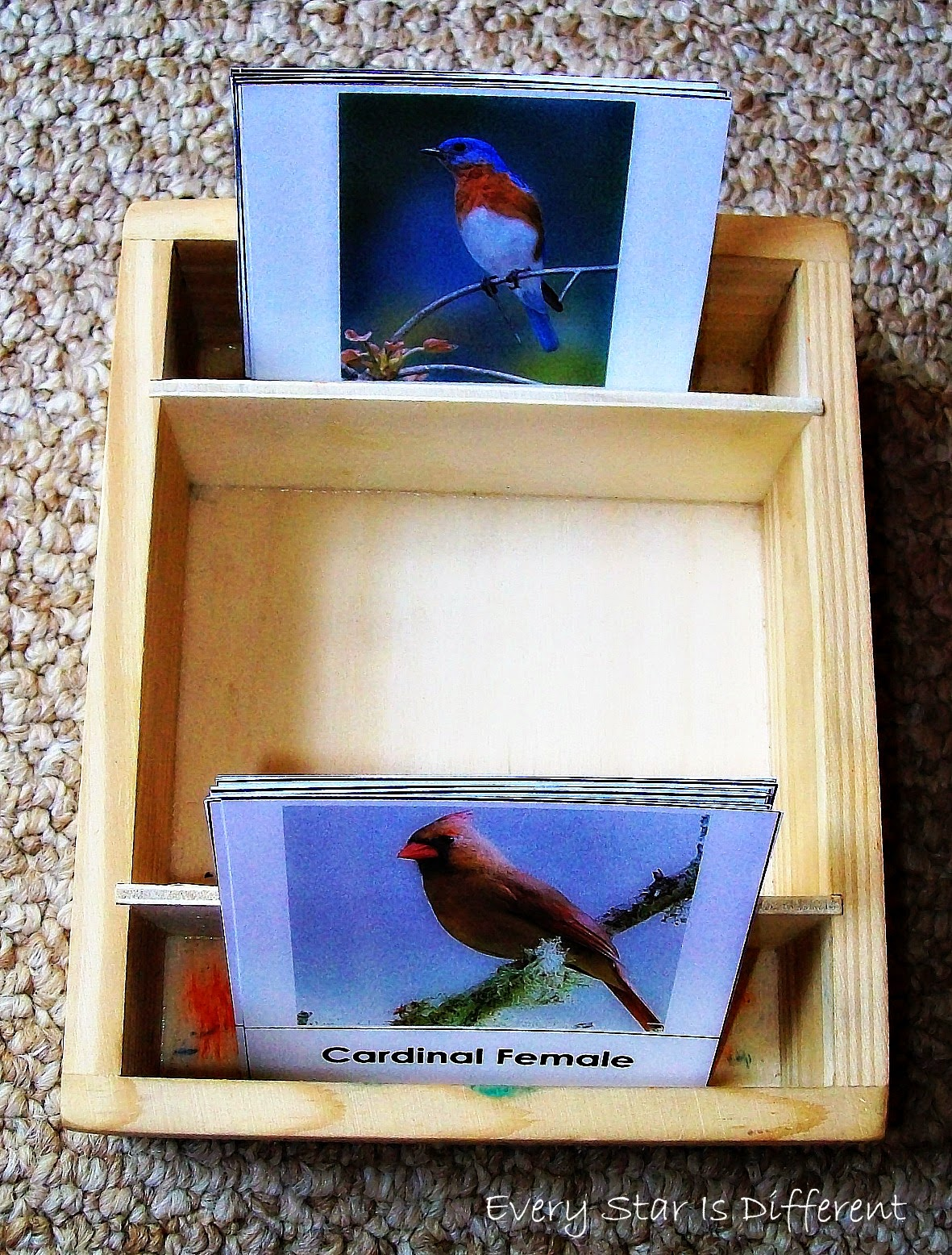 bird male and female difference match up cards free printable - Printable Bird Pictures 2