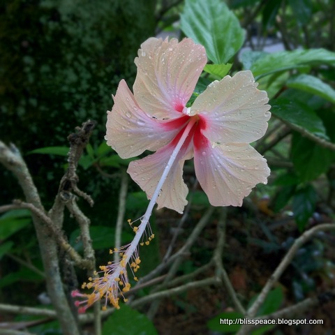 Hidden beauty....