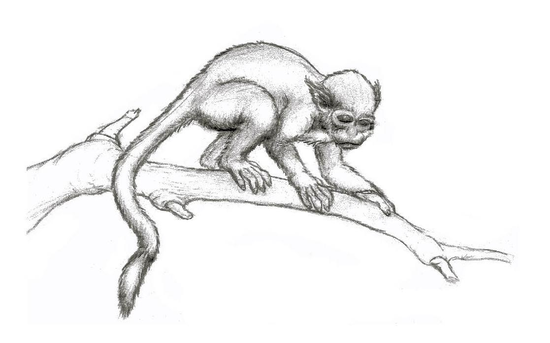 صور الكسلان ابيض واسود   Photo sloths