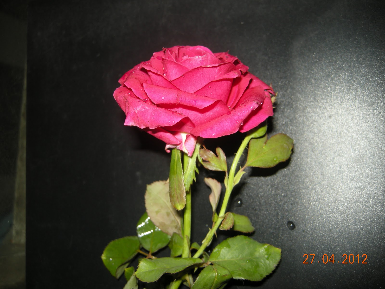 Rosethe queen of flowers rose the most beautiful flower rose the most beautiful flower izmirmasajfo