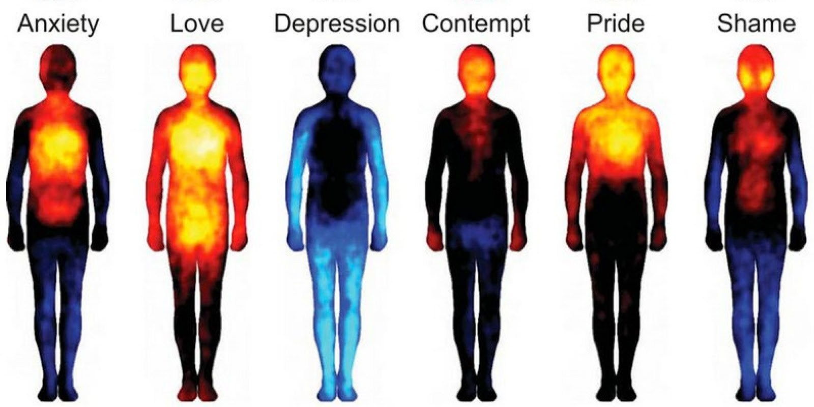 Human Body Temperature What Is The Human Body Temperature