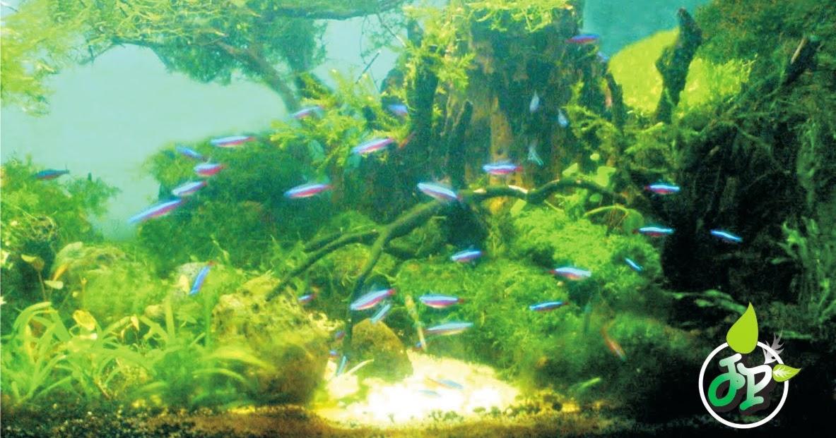 Belajar Aquascape Pemula Aquascape tanpa CO2 Injection ...