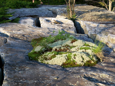 Oasis on a Rock