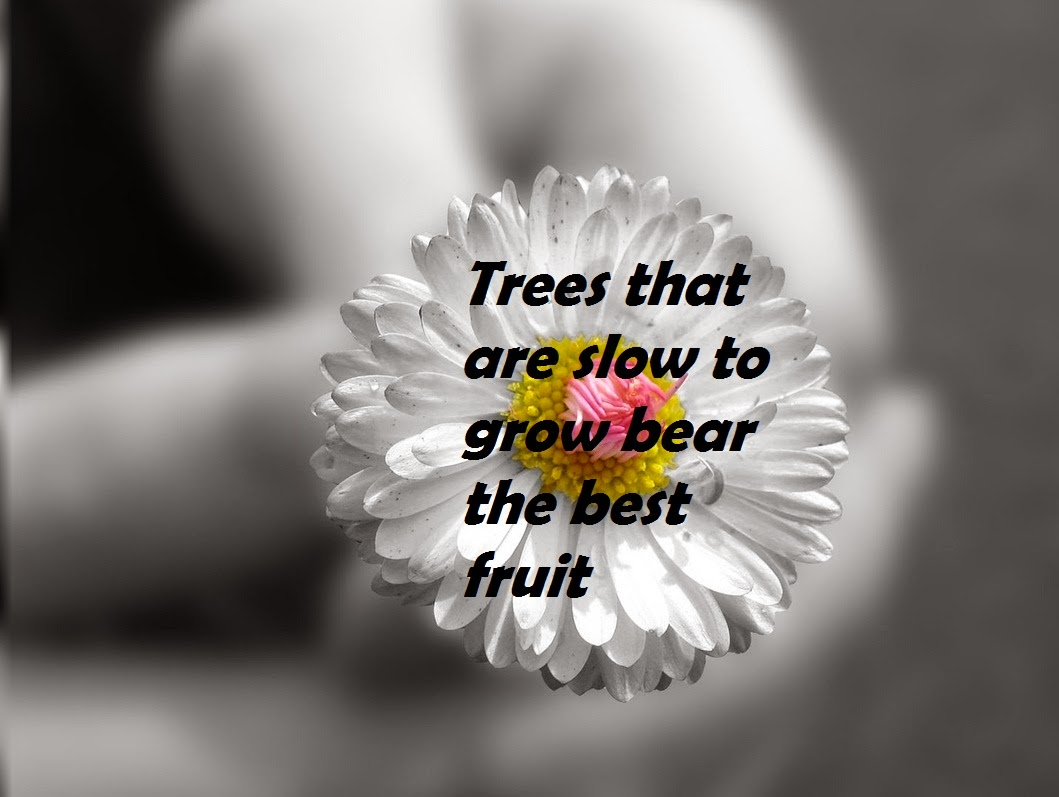 Fruit Quote/Short Motivational Quote/Hope Quote/Trees/Earth/Best Inspirational  Quote/Black U0026 White Background/Flower Background