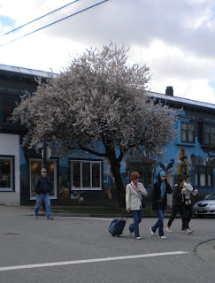 Single tree in full bloom against blue street-scape mural painted building, pedestrians in foreground