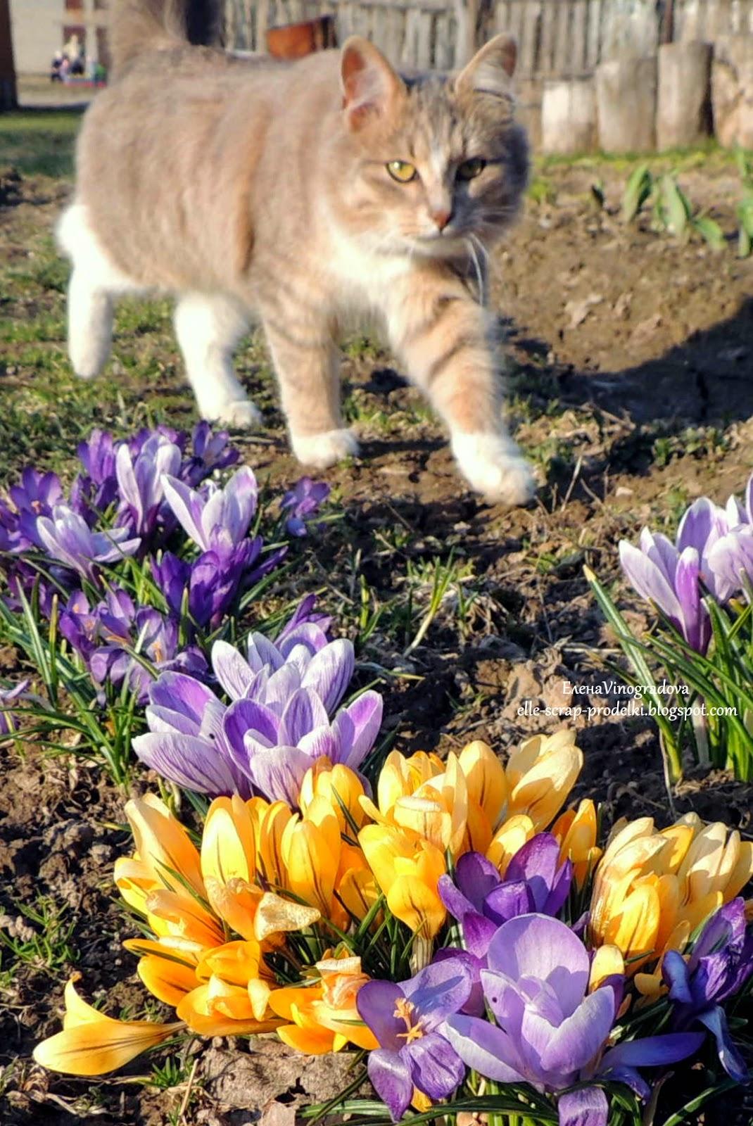 ЕленаVinogradova. Цветы нашего сада #4