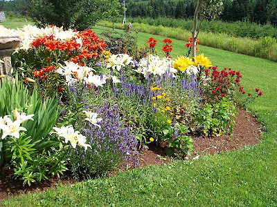 The flower gardens are doing pretty good, too. The lilies have all come out in bloom at the same time and they are just a riot of colours.