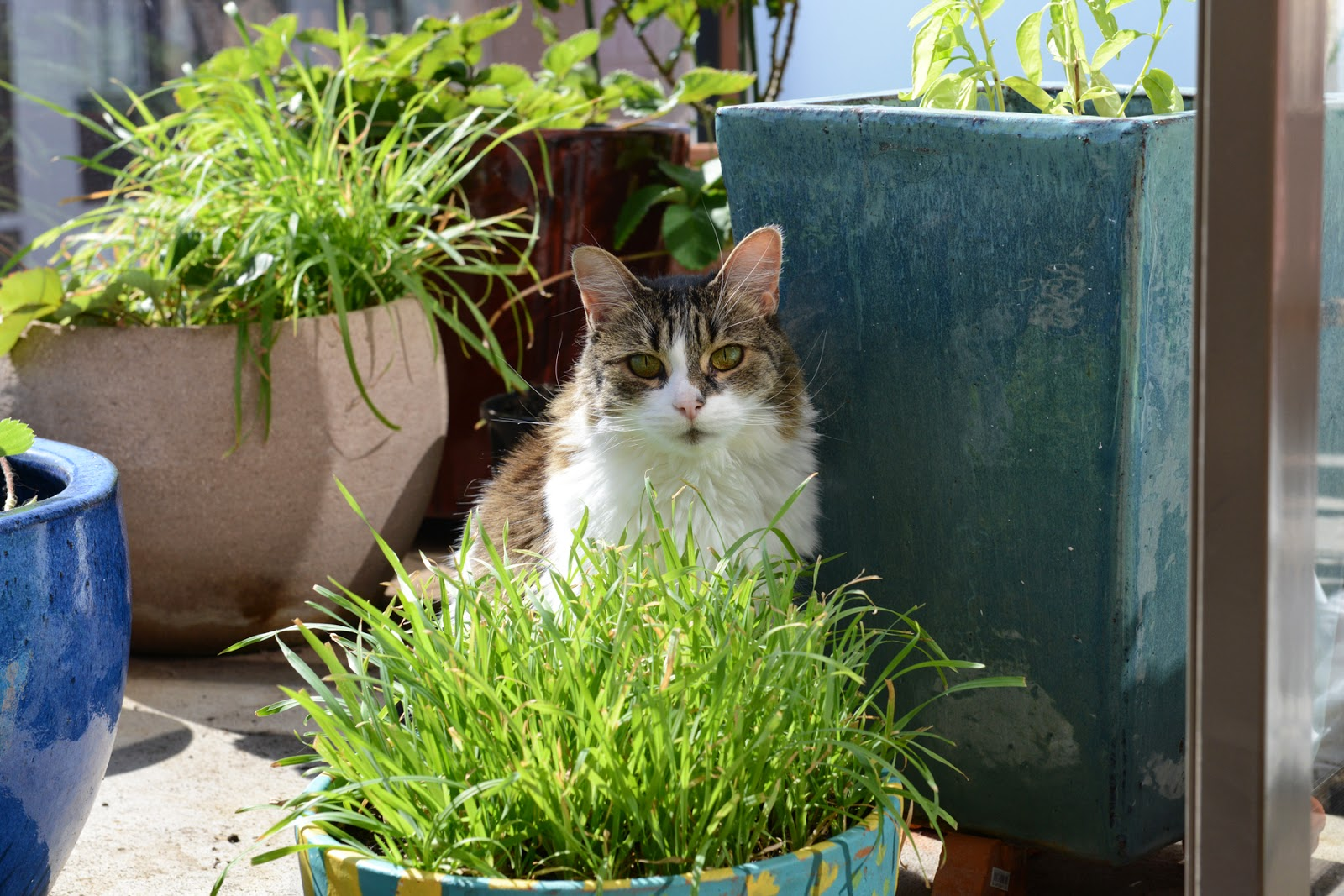Cat grass cats plants apartment cats