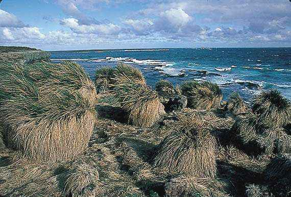 Wildlife Of The Malvinas Islands Images Photo Gallery