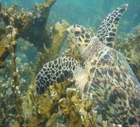 """Tortugas Marinas""""'Los Roques''"""