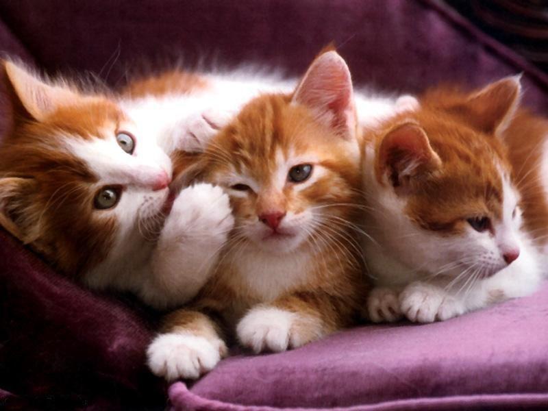 fotos de gatinhos fofos 8