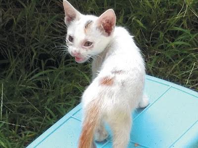 Foto-Foto Anak Kucing Lucu di Luar Jendela Kamar Kost Gue 11