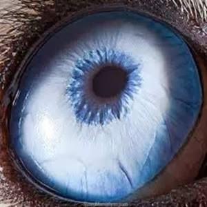 mata biru pudar