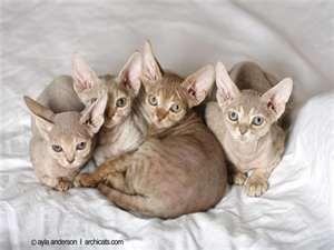 Jhie Pet Shop Jember Mengenai Kucing Memelihara Simanis